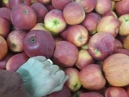 Apples fresh - photo 4